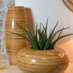 Izmještanje bilja u domove u teglama za cvijeće